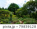 旧古河庭園のバラ園と若葉と新緑  79839128