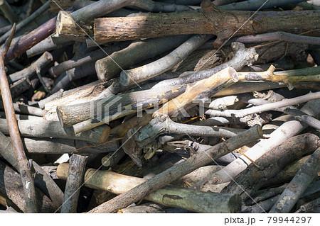 伐採され積み上げられた木の枝 薪 79944297