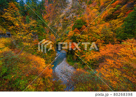 黒部峡谷の秋の風景 80268398