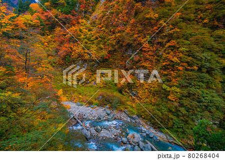 黒部峡谷の秋の風景 80268404