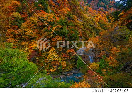 黒部峡谷の秋の風景 80268408