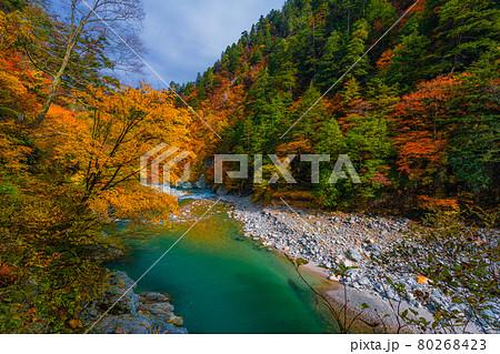 黒部峡谷の秋の風景 80268423