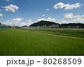 岐阜城 80268509