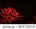 彼岸花 80276019
