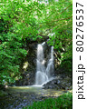 緑が鮮やかな滝 80276537
