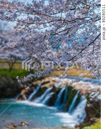 布橋十二ヶ滝(ぬのはしじゅうにがたき)/石川県小松市 西尾地区 2021年4月 80280511