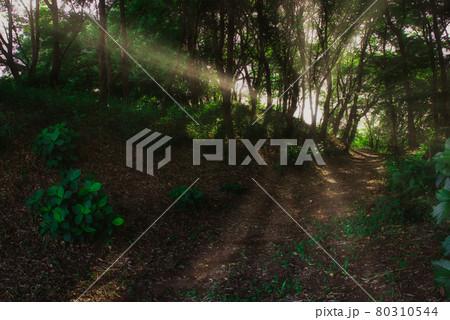 爽やかな高原の森の中の夕暮れの風景 80310544