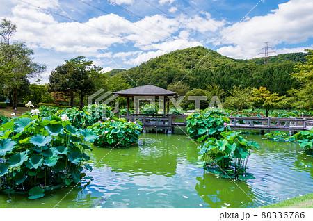 花はす公園(福井県 南越前町) 80336786