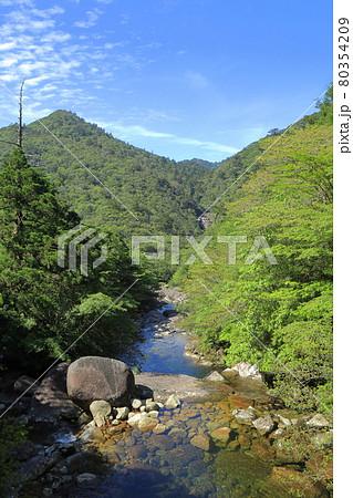 屋久島縄文杉トレッキングコースから見える愛子岳の景観 80354209