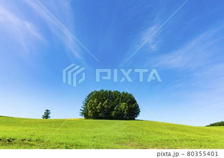 麦畑と親子の木 80355401