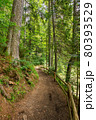 trail through park. beautiful nature scenery in summer. sunny weather in the forenoon. great place for outdoor activities 80393529