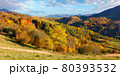 autumnal countryside of carpathian mountains. beautiful landscape in evening light. trees in colorful foliage and fields on rolling hills. ridge in the distance beneath a clouds on the sky 80393532