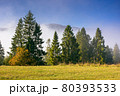 coniferous forest on the hill. nature scenery on a bright foggy morning. beautiful mountain landscape in autumn with clouds on the sky 80393533