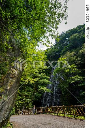 龍双ヶ滝(りゅうそうがたき)夏 2021年7月撮影/福井県池田町東青 80394966