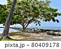 ハワイの休日 80409178
