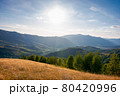 autumnal landscape of carpathian countryside. early autumn season in mountains. trees on the grassy hills rolling in to the distant valley. beautiful scenery on a warm sunny evening with clouds 80420996