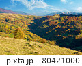 carpathian mountains countryside in evening light. trees in colorful foliage on hills and grassy meadow. ridge in the distance under the bright sky with clouds 80421000