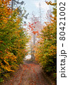country road through autumn forest. beech trees in colorful foliage. beautiful nature scenery on a foggy morning. travel back country concept 80421002