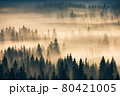 misty valley scenery at sunrise. beautiful nature background with coniferous trees in fog. mountain landscape of romania in autumn season 80421005