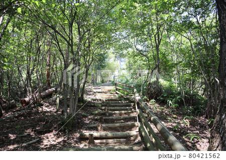 緑の樹々がトンネルのようになった階段の山道 80421562