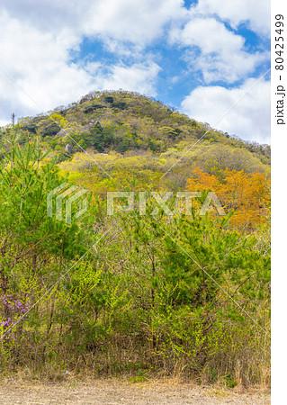 加西アルプス善防山登山口から見上げる(兵庫県加西市西笠原町)※作品コメント欄に撮影位置 80425499