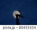 月 電柱 80455434