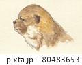 子犬 柴犬 80483653