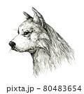 犬 横顔 80483654