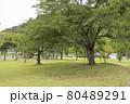 芝生のある公園 80489291