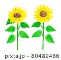 開花したヒマワリの水彩イラスト 80489486