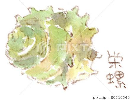 磯の食材:栄螺(サザエ)の水彩イラスト 80510546