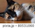 虚ろな表情で寝そべる三毛猫のアップ 80531060