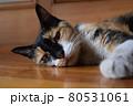 虚ろな表情で寝そべる三毛猫と白い前足 80531061
