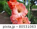 夏の大きなオレンジの花 80531063