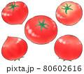 ミニじゃないトマト(線1色) 80602616