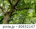 森の中で撮影した力強い木の幹 80632147