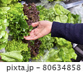 Close up woman's hand choosing fresh lettuce in supermarket. 80634858
