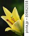 黄色のユリのアップ 80662558