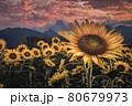 夕焼けと向日葵畑 80679973