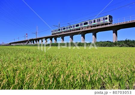 鹿島線E131系と実り始めた稲穂 80703053