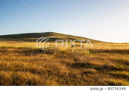 青空を背景にした黄金色に染まる草原 80736348