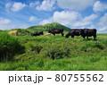 阿蘇山と放牧 80755562
