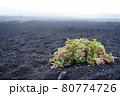 富士登山の風景、高山植物 80774726