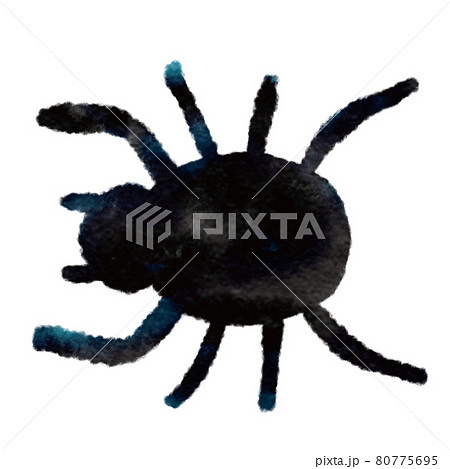 蜘蛛 80775695