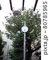 公園の時計 80785965