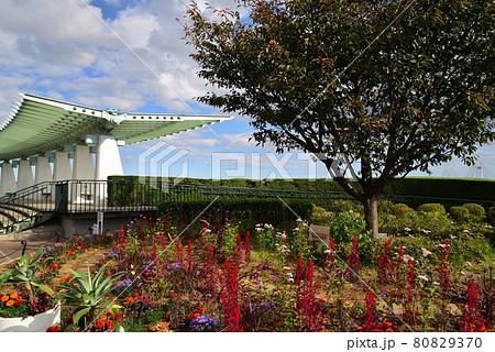 港の見える丘公園の花畑(神奈川県横浜市) 80829370