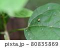 ザトウムシ(埼玉県/7月) 80835869