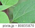 ザトウムシ(埼玉県/7月) 80835870