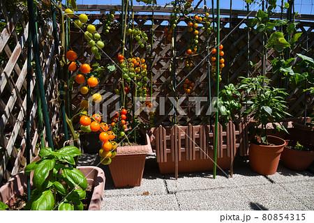 夏のルーフバルコニーでおうち時間 ミニトマトがいっぱいの家庭菜園 80854315