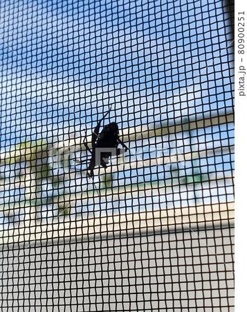 網戸にへばりつく虫を部屋から眺める-縦 80900251